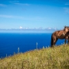 A horse grazes toward the summit of Ma'unga Terevaka, the highest point on Easter Island.