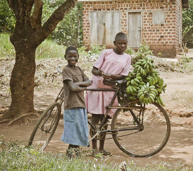 Girls transporting bitooke, a type of banana found in Uganda.