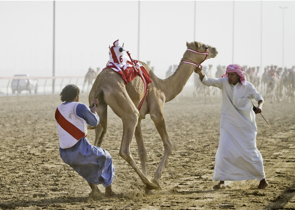 Off to the races camel racing in dubai farflungtravels camel racing in dubai photo by laura watilo blake thecheapjerseys Image collections