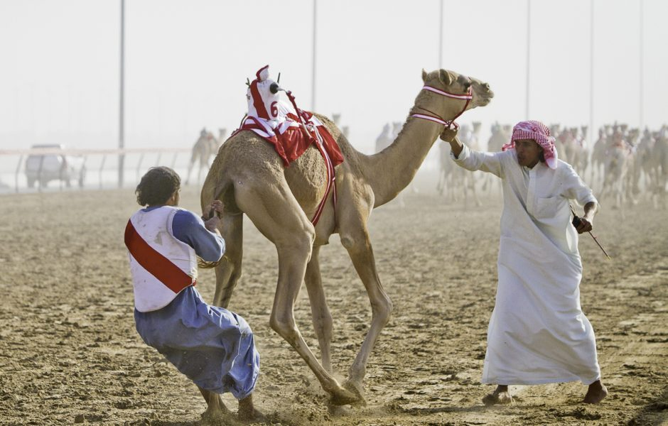 Off to the races camel racing in dubai farflungtravels off to the races camel racing in dubai altavistaventures Choice Image