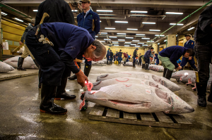 inspecting fish