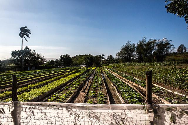 An organic farm near Viñales, Cuba.